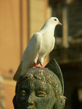 White dove. On monument stock images