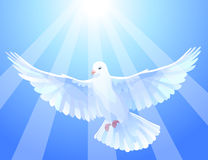 White dove stock illustration