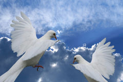 White Dove Against Beautiful Blue Cloudy Sky Royalty Free Stock Image