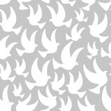 White dove in the air Stock Image