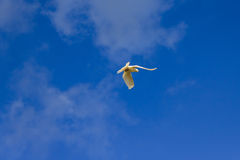 White dove on a background of  sky Stock Photography
