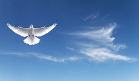 White dove in a blue sky, symbol of faith Royalty Free Stock Image