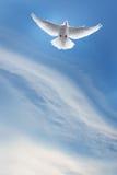 White dove in a blue sky, symbol of faith Stock Photos
