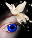 White dove bringing hope Royalty Free Stock Photography