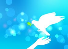White dove brings an olive branch and sits on the arm of man. Light blue glare blur background. Stock Photo