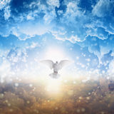 White dove descends from heaven. Holy spirit bird flies in skies, bright light shines from heaven, white dove - symbol of love and peace - descends from sky Royalty Free Stock Images
