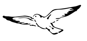 White Dove Drawing  Royalty Free Stock Image