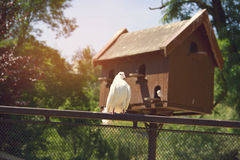 White Dove. On Fence with Pigeon House Stock Photo