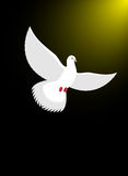 White dove flies in dark on divine light. Magical glow and white Royalty Free Stock Photos