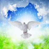 White dove flies in skies. Holy Spirit came down like white dove, holy spirit dove flies in blue sky, bright light shines from heaven, gospel story royalty free stock photos