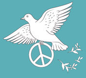 White Dove In Flight Holding An Antiwar Sign On Blue Background. Stock Images