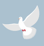 White Dove. Flying White pigeon. Bird with wings. White blue sym Royalty Free Stock Image