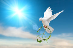 white dove holding green branch in peace sign stock image