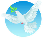 White dove holding green twig. International Peace Day concept Stock Photo