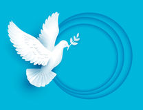 White dove holds twig symbol of peace Royalty Free Stock Photo