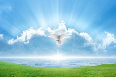 White dove Holy spirit bird flies in skies. Holy spirit bird flies in skies, bright light shines from heaven, white dove symbol of love and peace descends from royalty free stock photos