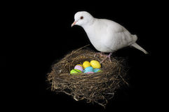 Easter dove Royalty Free Stock Images