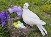 Easter dove Stock Image