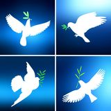 White dove with an olive branch against blue of the bright sky in four different versions set the background. A symbol of peace. Stock Photos