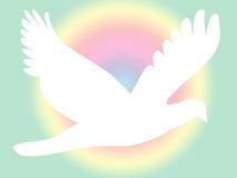 White Dove On Pastel Royalty Free Stock Images