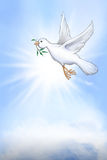 White dove of peace Stock Images