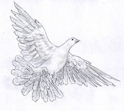 White dove - pencil sketch. White dove - symbol of peace - spread it's wings flying. Pencil drawing, sketch Stock Photos