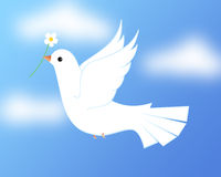 White dove / Pigeon. Illustration of flying white pigeon/ dove in blue sky Royalty Free Stock Image