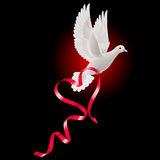 White dove with red ribbon Stock Photos