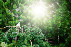 White dove sitting on tree Royalty Free Stock Photography