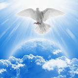 White dove symbol of love and peace flies above planet Earth. Elements of this image furnished by NASA stock photos