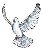 White dove vector royalty free illustration