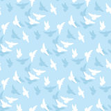 White dove vector Stock Images