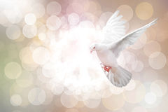 White Dove on vintage Stock Photography