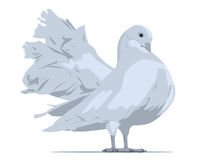 White dove on white background Stock Image
