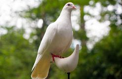 White Dove on White Bird Figure Stand Royalty Free Stock Photography