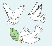 White Dove, White pigeons birds illustration Royalty Free Stock Images