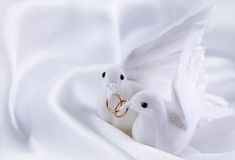 White doves. With wedding rings royalty free stock photo