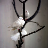 White Doves. Three white doves on a tree Royalty Free Stock Photography