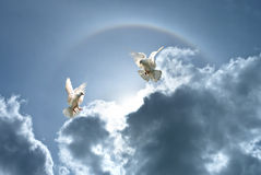 White doves against clouds and rainbow Stock Images