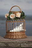 White doves in a cage Royalty Free Stock Image