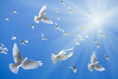 White doves flying. Against the blue background