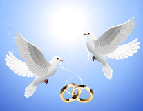 White_doves_holding_wedding_rings Photographie stock libre de droits