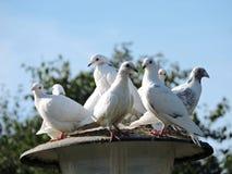 White doves on lamp Stock Photos
