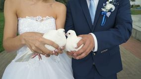 White doves in newlyeds`s hands. Wedding tradition with pigeons - symbols of the faith, love and faithfulness - unidentified newlyweds holding beautiful white stock footage