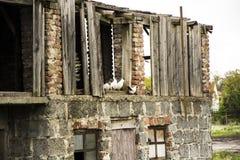 White doves old barn Stock Photos