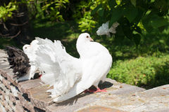 White doves in the park Stock Images