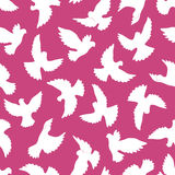 White doves seamless pattern on a violet background. Stock Images