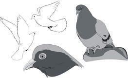 White doves sketches Royalty Free Stock Photo