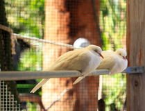 White Doves sleeping Stock Photography