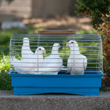 White doves in a small cage Stock Photography
